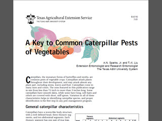 A Key to Common Caterpillar Pests of Vegetables